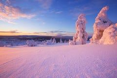 Puesta del sol sobre árboles congelados en Laponia finlandesa Foto de archivo libre de regalías