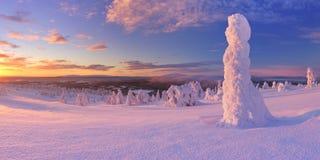 Puesta del sol sobre árboles congelados en una montaña en Laponia finlandesa Imagen de archivo libre de regalías