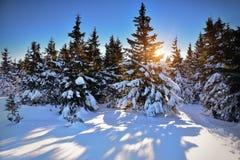 Puesta del sol sobre árboles nevados en el bosque Fotos de archivo
