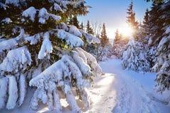 Puesta del sol sobre árboles nevados en el bosque Foto de archivo libre de regalías