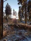 Puesta del sol sobre árboles nevosos Fotos de archivo libres de regalías