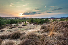 Puesta del sol sobre brezo y la arena en el área de Veluwe Fotografía de archivo
