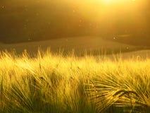Puesta del sol sobre campo Imagen de archivo libre de regalías