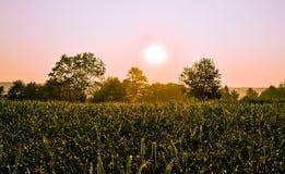 Puesta del sol sobre campo Fotos de archivo