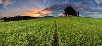 Puesta del sol sobre campo de granja con el árbol solitario. Foto de archivo