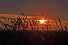 Puesta del sol sobre campo de grano Foto de archivo libre de regalías