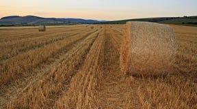Puesta del sol sobre campo de trigo imagen de archivo libre de regalías