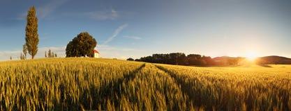 Puesta del sol sobre campo de trigo con el camino en el Sl Imagenes de archivo