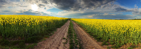 Puesta del sol sobre campo del canola con la trayectoria en Eslovaquia - panorama imagen de archivo libre de regalías