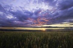 Puesta del sol sobre campo del cereal Imagenes de archivo