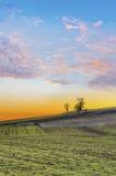 Puesta del sol sobre campo verde agrícola Imagen de archivo libre de regalías