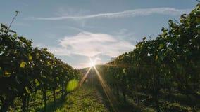 Puesta del sol sobre campos del viñedo en Toscana Italia time lapse 4K con las nubes y el sol que pasan cerca almacen de metraje de vídeo
