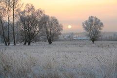 Puesta del sol sobre el bosque en helada Foto de archivo