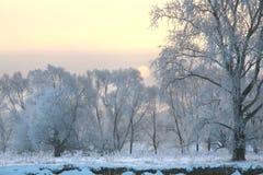 Puesta del sol sobre el bosque en helada Imagen de archivo