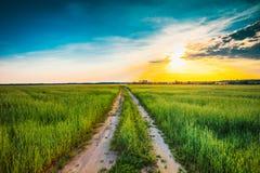 Puesta del sol sobre el camino rural en campo verde Fotografía de archivo libre de regalías