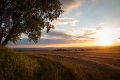Puesta del sol sobre el campo cosechado imágenes de archivo libres de regalías