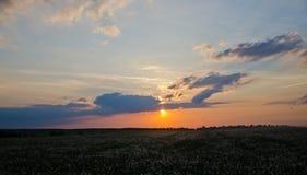 Puesta del sol sobre el campo de dientes de león Imagen de archivo
