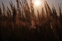 Puesta del sol sobre el campo de flor fotos de archivo