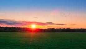 Puesta del sol sobre el campo verde Fotografía de archivo