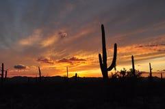 Puesta del sol sobre el desierto de Arizona Imagen de archivo libre de regalías