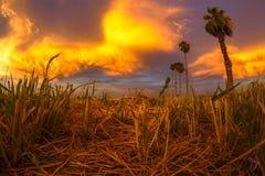 Puesta del sol sobre el heno del corte fotografía de archivo libre de regalías