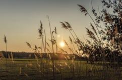 Puesta del sol sobre el horizonte y el prado Imagenes de archivo