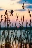 Puesta del sol sobre el lago visto a través de la hierba Foto de archivo