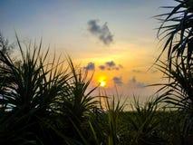 Puesta del sol sobre el mar y el pino imagenes de archivo