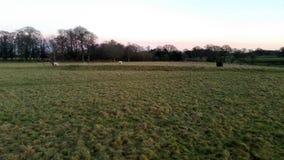 Puesta del sol sobre el parque de Tatton con la manada de los ciervos en fondo - jardines del parque de Tatton Fotografía de archivo libre de regalías