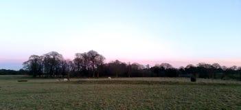 Puesta del sol sobre el parque de Tatton con la manada de los ciervos en fondo - jardines del parque de Tatton Foto de archivo