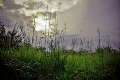 Puesta del sol sobre el prado Foto de archivo libre de regalías