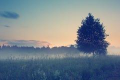 Puesta del sol sobre el prado debajo de la niebla con el filtro del estilo de Instagram Imagen de archivo