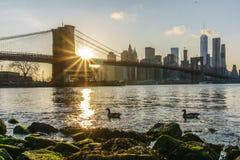Puesta del sol sobre el puente de Brooklyn Fotos de archivo