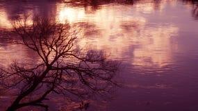 Puesta del sol sobre el río de Waikato en Ngaruawahia imagen de archivo libre de regalías