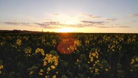 Puesta del sol sobre el Raspfield Imágenes de archivo libres de regalías