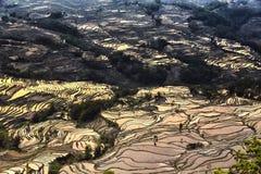 Puesta del sol sobre el terrance del arroz en Yuanyang, Yunan, China Foto de archivo