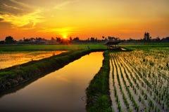 Puesta del sol sobre granja del arroz Fotos de archivo