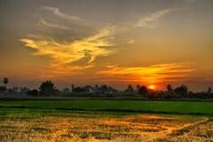 Puesta del sol sobre granja verde del arroz Imagenes de archivo