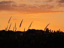 Puesta del sol sobre hierbas Fotografía de archivo libre de regalías