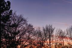 Puesta del sol sobre la imagen del bosque en el tono anaranjado-azul Imagen de archivo libre de regalías
