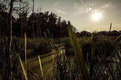 Puesta del sol sobre la región pantanosa de Michigan Imagenes de archivo