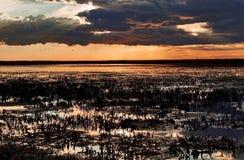 Puesta del sol sobre las camas de lámina cosechadas del Camargue fotografía de archivo libre de regalías