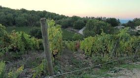 Puesta del sol sobre las colinas con los viñedos en la región de Chianti metrajes