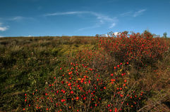 Puesta del sol sobre las colinas verdes Foto de archivo libre de regalías