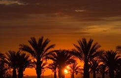 Puesta del sol sobre las palmeras Imágenes de archivo libres de regalías