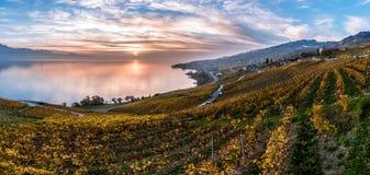 Puesta del sol sobre las terrazas del viñedo en Lavaux, lago geneva, Suiza imagen de archivo