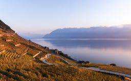 Puesta del sol sobre las terrazas del viñedo en Lavaux, lago geneva y montañas de las montañas Imagenes de archivo