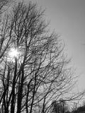 Puesta del sol sobre los árboles Foto de archivo