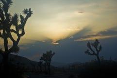 Puesta del sol sobre los árboles de Joshua Imagen de archivo libre de regalías