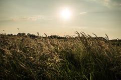 Puesta del sol sobre los campos Imagen de archivo libre de regalías